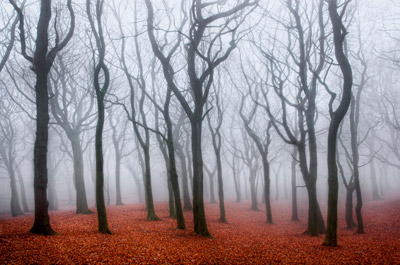 tandle-woods-in-fog